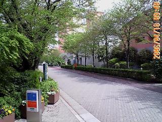 オリンピック桜並木.jpg