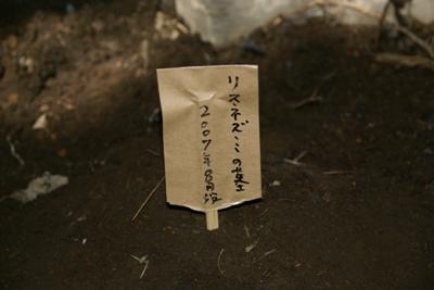 虫埋葬(11).JPG